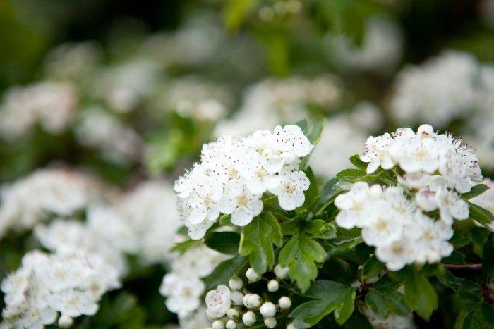 flowers (Image: NavyBlur)